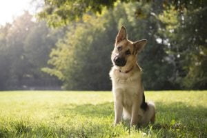 tips on how to pick a pet service provider, good vs bad